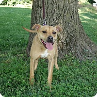 Adopt A Pet :: PJ - Columbia, IL