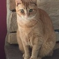 Adopt A Pet :: Helki (young adult) - Harrisburg, PA