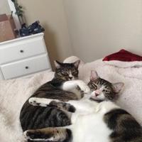Adopt A Pet :: Jason - New Orleans, LA
