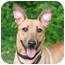 Photo 3 - Basenji Mix Dog for adoption in Westfield, New York - Fiona