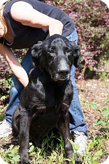 Labrador Retriever Mix Dog for adoption in Marietta, Georgia - Waffle