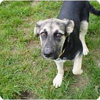 Adopt A Pet :: Kalie - New Boston, NH