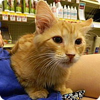 Adopt A Pet :: Tigger - The Colony, TX