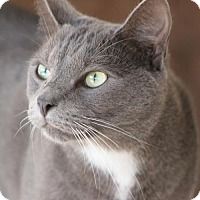 Adopt A Pet :: Simon - North Fort Myers, FL