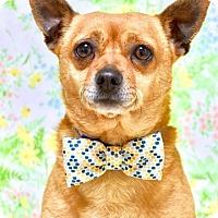 Adopt A Pet :: Teddy - Dublin, CA
