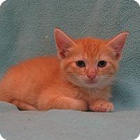 Adopt A Pet :: Happy - Redwood Falls, MN