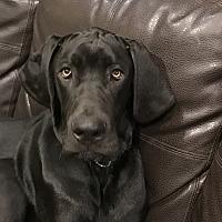 Adopt A Pet :: Niko - Jasper, TN