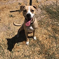 Adopt A Pet :: Goofy - Encino, CA