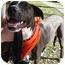 Photo 3 - Labrador Retriever/Border Collie Mix Dog for adoption in Los Angeles, California - Noelle