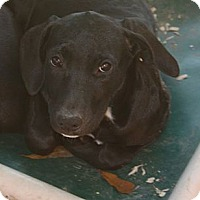 Adopt A Pet :: Colbie - in Maine - kennebunkport, ME
