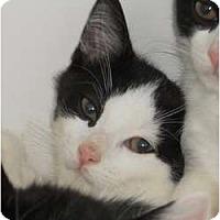 Adopt A Pet :: Patch - Maywood, NJ