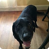 Adopt A Pet :: Drake - Cumming, GA