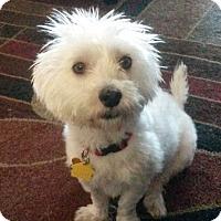 Adopt A Pet :: Dolly - Playa Del Rey, CA