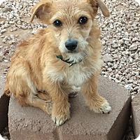 Adopt A Pet :: Burrito - Phoenix, AZ