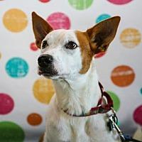 Adopt A Pet :: Millie - Elizabethtown, PA