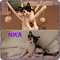 Adopt A Pet :: Nika - Jeffersonville, IN