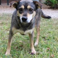 Adopt A Pet :: Sissy - Waco, TX