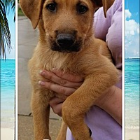 Adopt A Pet :: Roman - Ringwood, NJ