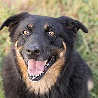 Adopt A Pet :: Harmony - Portland, ME