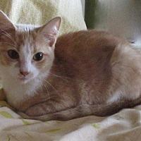 Adopt A Pet :: SAMSON - detroit, MI