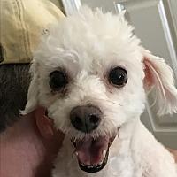 Adopt A Pet :: Patsy - San Marcos, CA