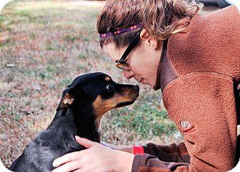 Miniature Pinscher Mix Dog for adoption in White Plains, New York - Major