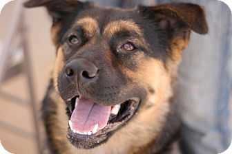 German Shepherd Dog Mix Dog for adoption in Wichita Falls, Texas - Zoey