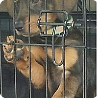 Adopt A Pet :: Rosebud - Minneapolis, MN