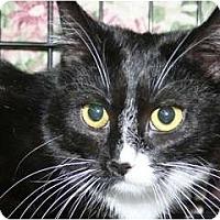 Adopt A Pet :: Annie - Frederick, MD