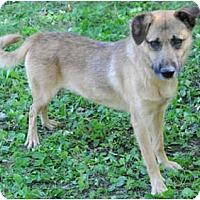 Adopt A Pet :: Montgomery - Chicago, IL