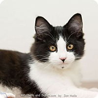 Adopt A Pet :: Copeland - Fountain Hills, AZ