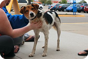 Hound (Unknown Type) Mix Dog for adoption in Rochester, Minnesota - Basil