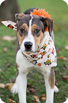 Terrier (Unknown Type, Medium) Mix Dog for adoption in Flint, Michigan - Tammy