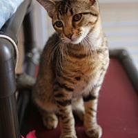 Adopt A Pet :: RAYNE (NELSON FOSTER) - Olive Branch, MS