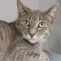 Adopt A Pet :: Carrie - Alameda, CA