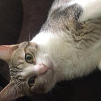 Adopt A Pet :: Haru - Honolulu, HI