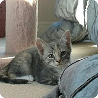 Adopt A Pet :: Lily - Herndon, VA