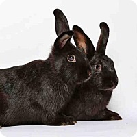 Adopt A Pet :: LUNA - Murray, UT