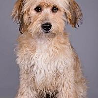 Adopt A Pet :: Tyler - Lodi, CA