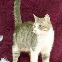 Adopt A Pet :: Jess - Bristol, IN