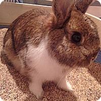 Adopt A Pet :: Thumper - Lakeland, FL
