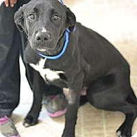 Adopt A Pet :: Tex - Cumming, GA