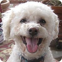 Adopt A Pet :: Cami - La Costa, CA