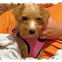 Adopt A Pet :: Bella - Carey, OH