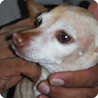 Adopt A Pet :: Marie - Arenas Valley, NM