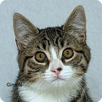 Adopt A Pet :: Gina N - Sacramento, CA