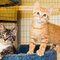 Adopt A Pet :: Petsmart Kittens - Seville, OH