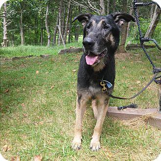 German Shepherd Dog Mix Dog for adoption in Louisville, Kentucky - Bruce