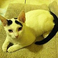 Adopt A Pet :: Darwin - Miami, FL