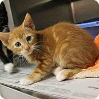 Adopt A Pet :: SPARKY - San Francisco, CA